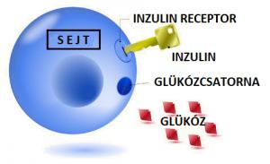 inzulinrezisztencia ételrendelés