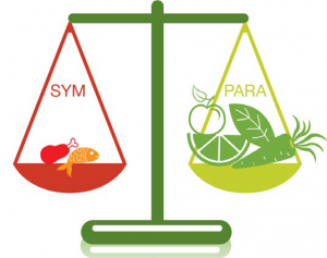 Neked szénhidrát túlsúlyosan kell táplálkoznod ahhoz, hogy a mérleg egyensúlyba kerüljön.