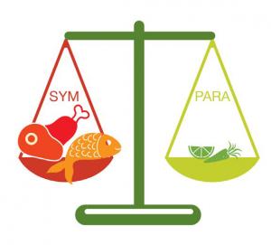 És az egyensúly megtartása érdekében minden étkezés alkalmával olyan élelmiszereket kell fogyasztanod, amik a szimpatikus oldaladat erősítik, azaz fehérje és zsírban gazdag ételeket kell enned.